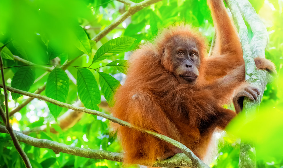 With Tree Free Products you not only save the Turtles, but the Orang-utans too...!!!!